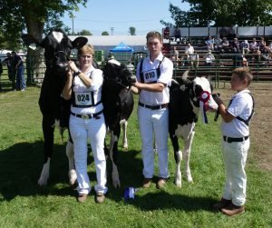 The Junior champion cattle In the open Holstein Show (from left): Honorable Mention Wenallt Coach Finesse (with Diane Powell); Reserve Champion Redlodge Chip Alani (with Connor Halpenny); and Champion Knonaudale Mudlet (with 10-year-old Josh Ur). Zandbergen photo, Nation Valley News